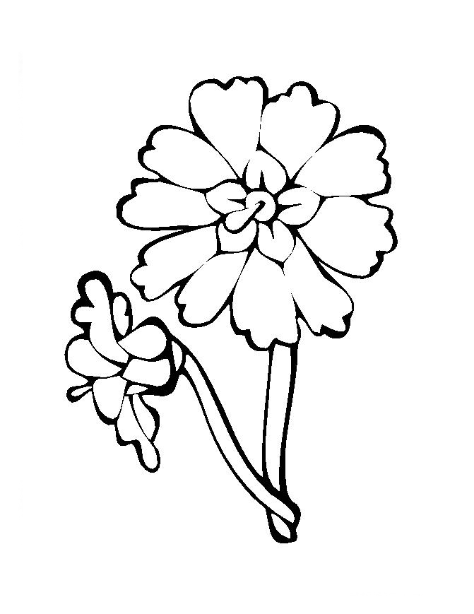 flores para colorir grande