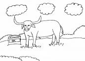 desenho de boi para colorir