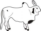 desenhos para colorir de boi