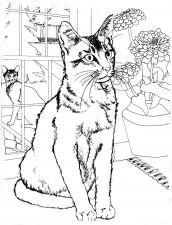 desenho de animais para pintar